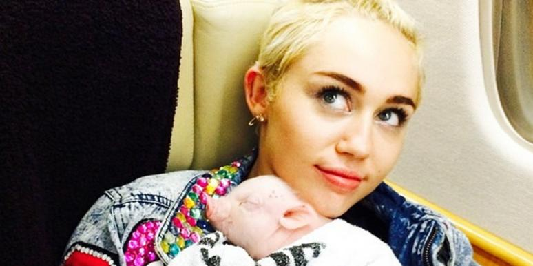 Miley Cyrus and new pet pig Bubba Sue