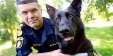 rapports opus sperm-sniffing dog