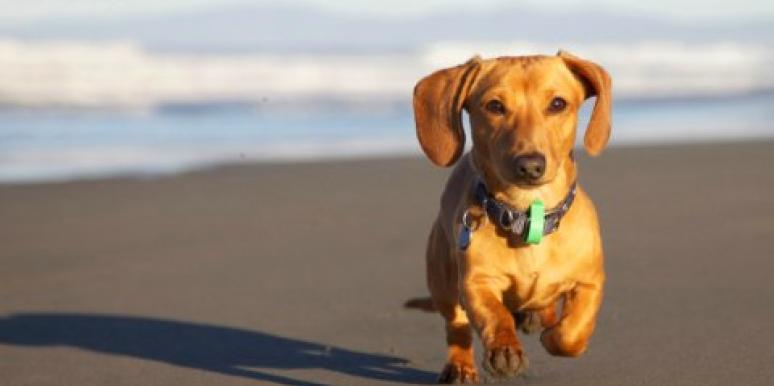 10 Dogs Who Found Love On The Beach (In GIFs!)