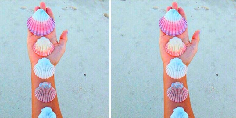 Choose A Shell And Discover What It Reveals About You