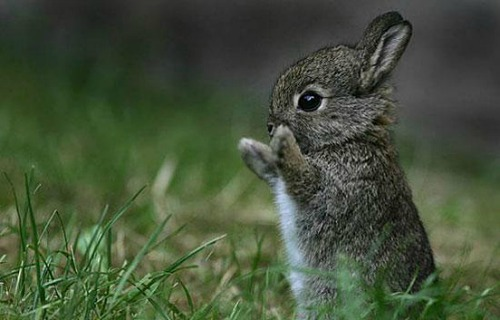 """<a href=""""http://thedesigninspiration.com/articles/70-cutie-baby-animals-bring-your-a-good-mood/"""">thedesigninspiration.com</a>"""