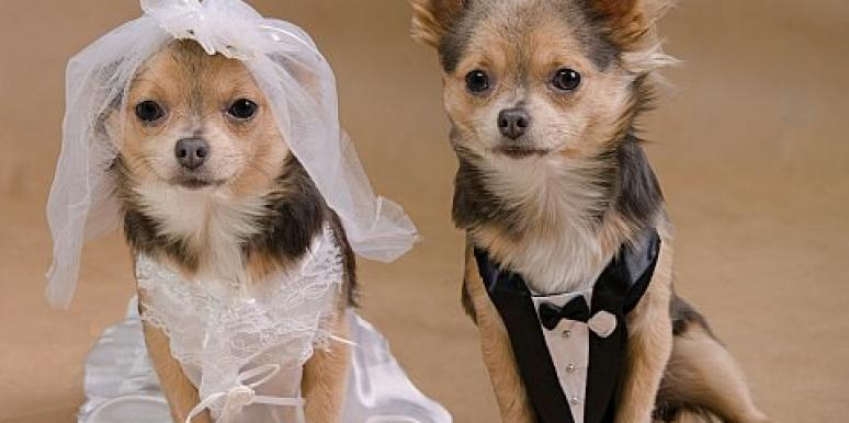 Love Stories: Two Rescued Dogs Get Married In A Too-Cute Wedding