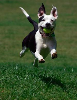 "<a href=""http://www.independentmail.com/news/2008/apr/22/what-do-about-pit-bulls-vicious-dog-issue-anderson/"">independentmail.com</a>"