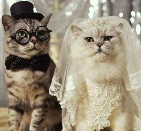 """<a href=""""http://www.catsaid.org/product/wedding-favours/"""">catsaid.org</a>"""