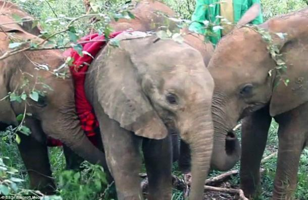 """<a href=""""http://www.dailymail.co.uk/news/article-2628032/Orphaned-elephant-refused-leave-dead-mothers-side.html?ITO=1490&ns_mchannel=rss&ns_campaign=1490"""" target=""""_blank"""">dailymail.co.uk</a>"""