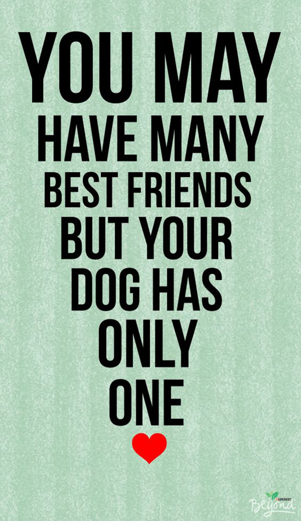 Dogs Are A Woman's Best Friend Quotes