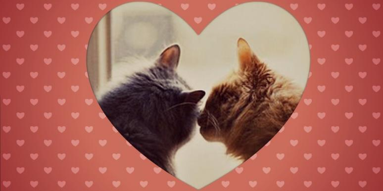 cats kissing