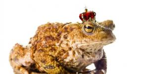 frog wearing crown