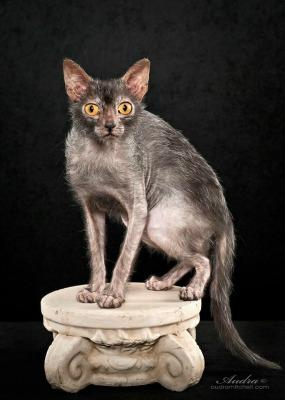 "<a href=""http://dailymail.2buffer.com/aaaaahhh-looking-for-a-cat-that-acts-like-a-dog-and-likes-to-hunt-meet-the-lykoi-also-known-as-the-wolf-cat-dailym-ai-1as1rjr-5426"" target=""_blank"">dailymail.com</a>"