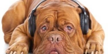headphone dog