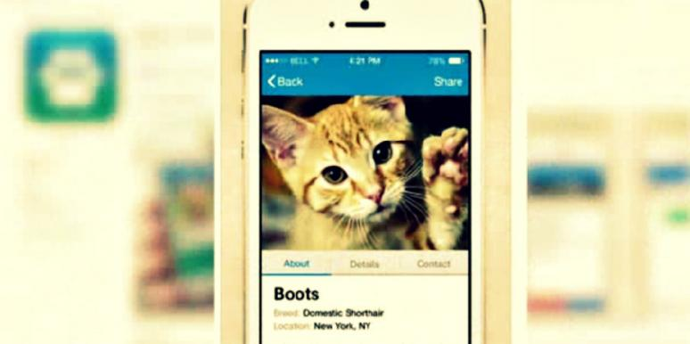 allpaws tinder for pets