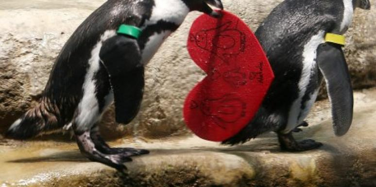 penguins with hearts in their beaks