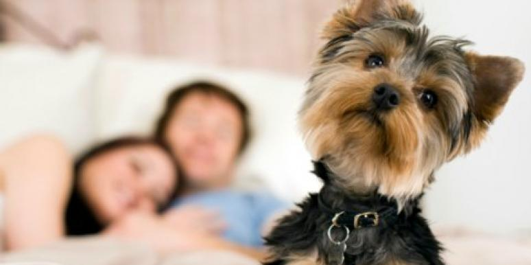 Relationship Advice: Should We Stay Together For The Dog?