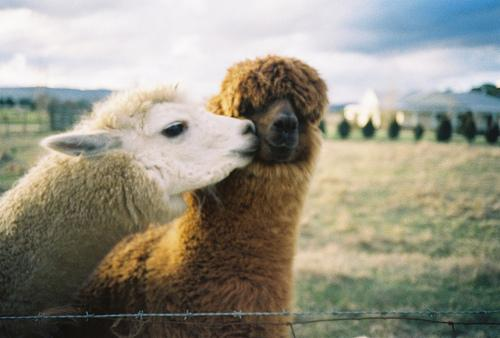 "<a href=""http://www.tumblr.com/tagged/animals-kissing"">tumblr</a>"