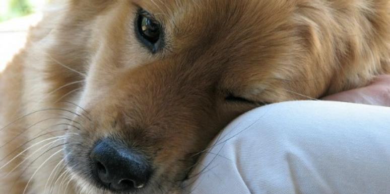 15 Reasons Dogs Make The Best Boyfriends On The Planet