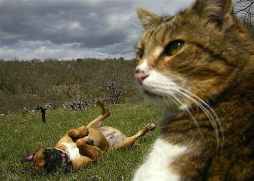 "<a href=""http://www.mandatory.com/2013/04/04/the-best-animal-selfies-to-ever-grace-the-internet/1"">mandatory.com</a>"