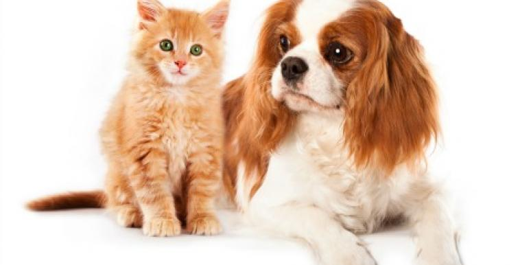 3 Tips for Finding Trusted Pet Care