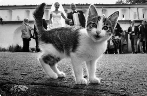"""<a href=""""http://www.k102.com/articles/amy-james-journal-326761/when-animals-photobomb-wedding-pictures-11103648/"""">k102.com</a>"""