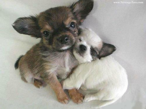 """<a href=""""http://www.mybs.com/8139-cuteness-overload-15-snuggles-partiesthat-you-wish-you-were-apart-of/"""">mybs.com</a>"""