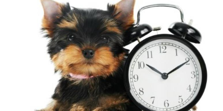 puppy with an alarm clock