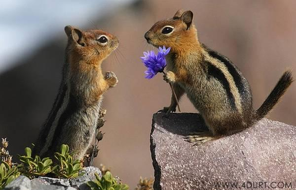 "<a href=""http://www.topdreamer.com/animals-in-love-cute-animals-expressing-feelings/"" target=""_blank"">topdreamer.com</a>"