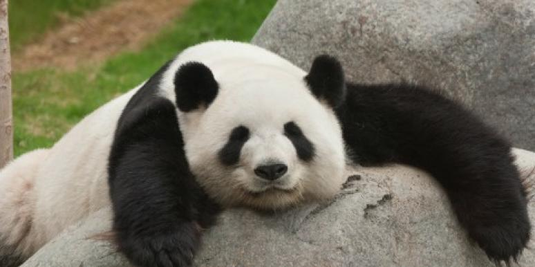 10 Reasons Pandas Make Lousy Boyfriends