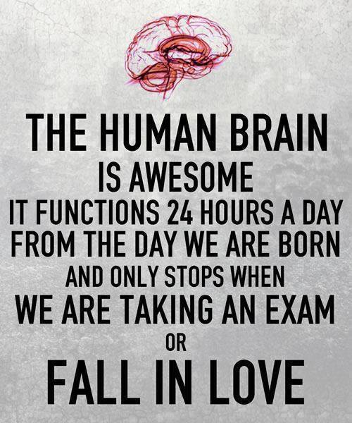 human brain on love meme