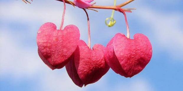 three hearts hanging from a tree