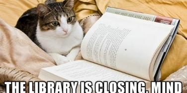 9 Cats Trying To Hit On You With Government Shutdown Pickup Lines
