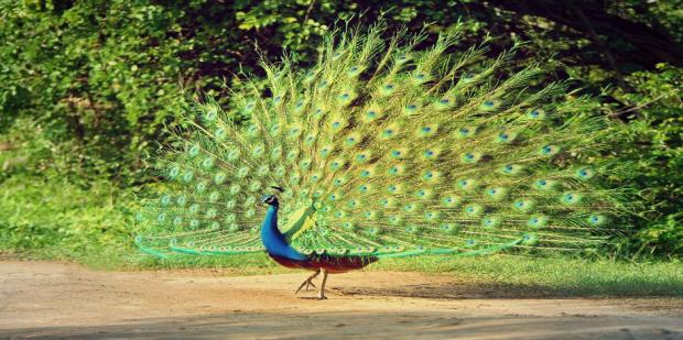 Relationships: How To Tell If You're Dating A Peacock