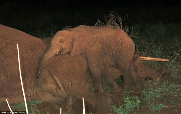 "<a href=""http://www.dailymail.co.uk/news/article-2628032/Orphaned-elephant-refused-leave-dead-mothers-side.html?ITO=1490&ns_mchannel=rss&ns_campaign=1490"" target=""_blank"">dailymail.co.uk</a>"