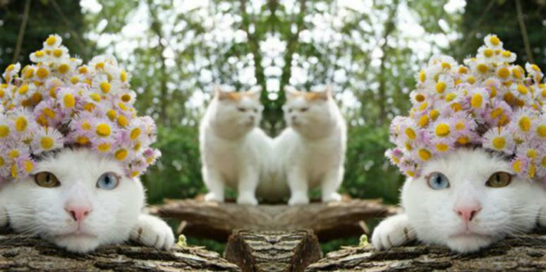 2 Cats Predict Your Love Horoscope Based On Zodiac Signs