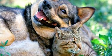 cat and dog in field.