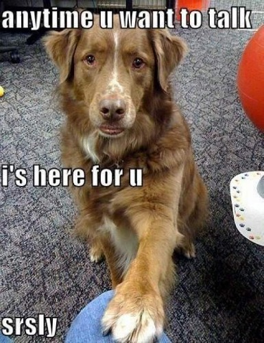 """<a href=""""http://www.funnyjunk.com/funny_pictures/3925468/Why+I+love+my+dog"""" target=""""_blank"""">funnyjunk.com</a>"""