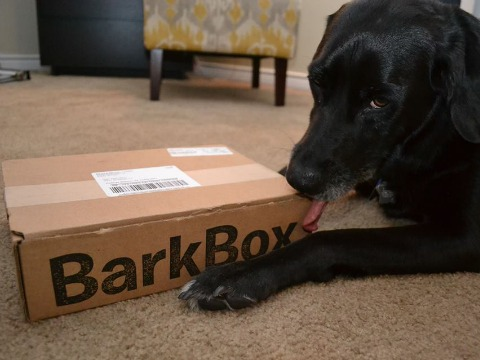 Photo: Barkbox