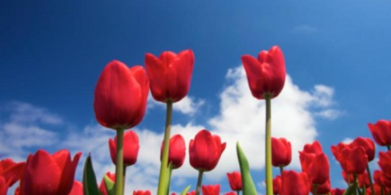 4 Ways To Get A Fresh Start In Love This Spring [EXPERT]