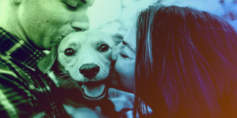 The Differences Between Cat And Dog People Will Shock You