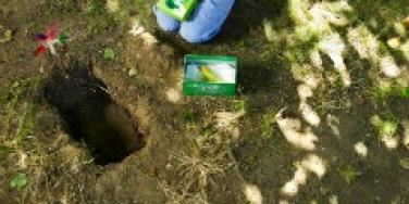 pet burial bury funeral child dig