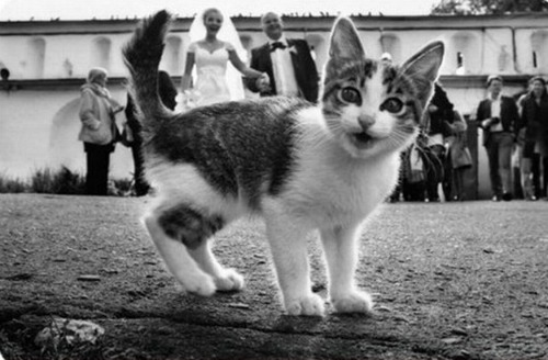 "<a href=""http://www.k102.com/articles/amy-james-journal-326761/when-animals-photobomb-wedding-pictures-11103648/"">k102.com</a>"
