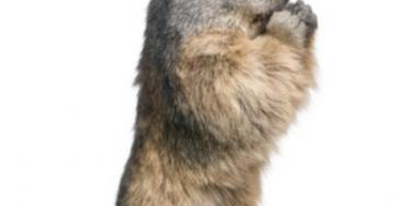 Groundhog Day: How To Apologize & Get Your Own Do-Over [EXPERT]