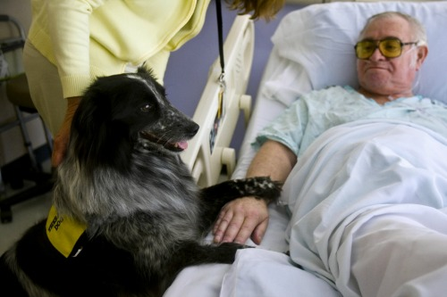 """<a href=""""http://www.oregonlive.com/pets/index.ssf/2009/06/therapy_dogs_provide_a_unique.html"""">oregonlive.com</a>"""