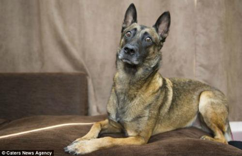 "<a href=""http://www.dailymail.co.uk/news/article-2598697/Army-medic-rescues-hero-Afghan-dog-sleep-developing-PTSD-time-sniffing-lethal-Taliban-weapons.html#ixzz2yCcwJ92O"" target=""_blank"">dailymail.co.uk</a>"