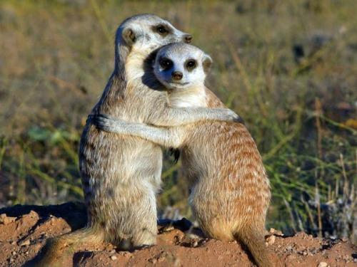 "<a href=""http://movies.nationalgeographic.com/movies/meerkats/pictures/"">nationalgeographic.com</a>"