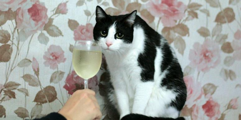 apollo peak cat wine