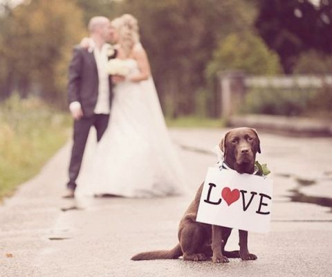 """<a href=""""http://itsabrideslife.com/tag/dogs-in-wedding-ceremony-2013/"""" target=""""_blank"""">itsabrideslife.com</a>"""