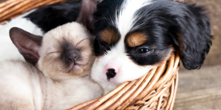cats and dogs cuddling