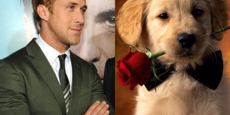 Love: Ryan Gosling Vs. Puppies