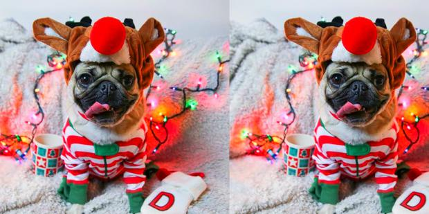 Animals That Love Opening Up Christmas Gifts