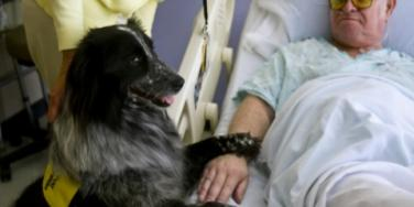 11 Touching Moments of Love With Therapy Animals